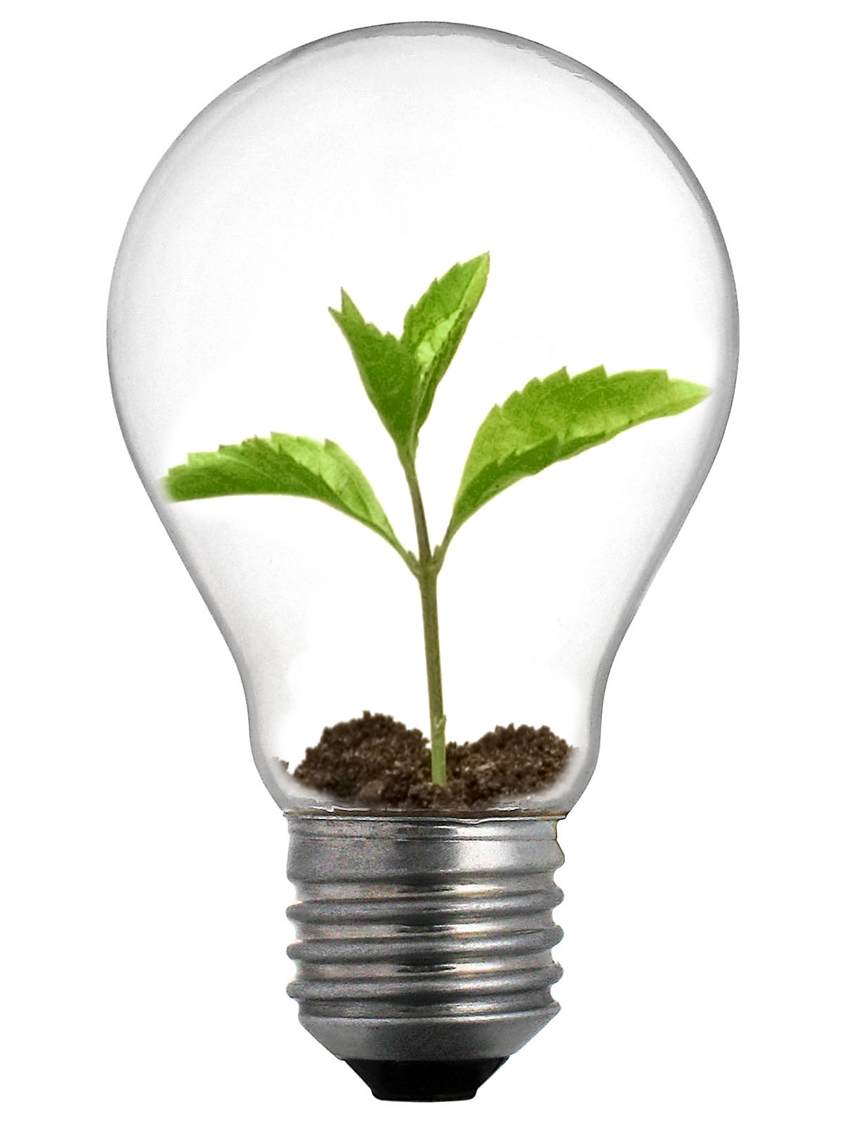 Canada S Nanny State Dim Idea To Ban 100 And 75 Watt Incandescent Light Bulbs On January 1 2014